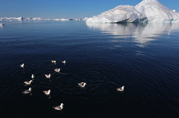 海鷗悠遊在格陵蘭島伊盧利薩特雅各港冰川。(Joe Raedle/Getty Images)