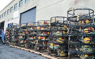 美国西海岸捕蟹渔民停止罢工 本周开始捕蟹