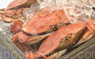 加州捕蟹季来临 今年螃蟹无毒放心吃