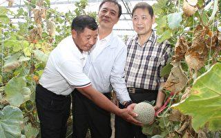 台塑办理花生及洋香瓜健康栽培观摩