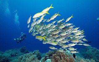 台灣上班族愛海護海 自發潛海底 撿光垃圾