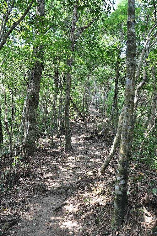 雖然山徑陡峭,但路徑雅潔。很喜歡這樣的森林小徑。(圖片提供:tony)