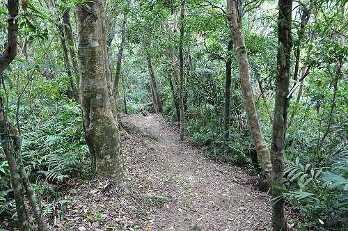 九芎根登山步道,自然原始的山徑。(圖片提供:tony)