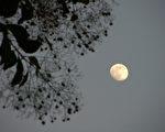 新诗:盐水溪畔的月色