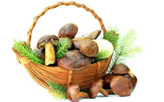 網路瘋傳蘑菇中毒亡 食藥署:謠言