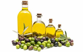橄欖樹會是佛州下個種植產業嗎?