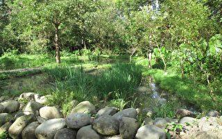 生態農村綠行動 濕地打造螢火蟲餐廳