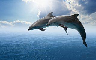 声纳技术揭示海豚眼中世界 科学家惊异