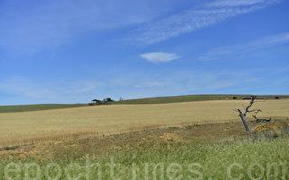 澳洲严重干旱 今冬农作物将减产四成