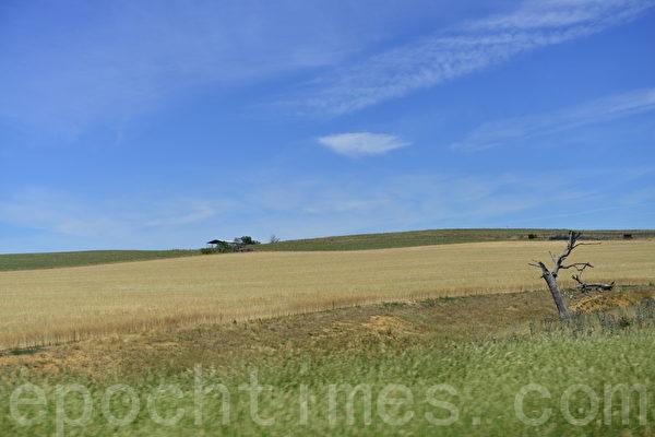 楊鎮位於紐省西南,離悉尼市約380公里。楊鎮地區的面積為2,670平方公里。此是楊鎮之外的風景。(簡玬/大紀元)