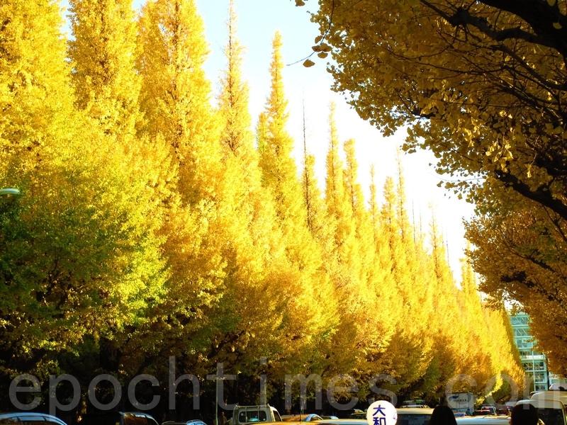 東京著名的銀杏景點。(允嘉徽/大紀元)