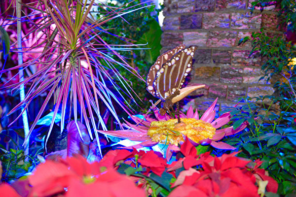 游客在展区还会观赏到不同种类的植物、果树、超大花卉、蜜蜂和蝴蝶等,漫步园中,犹如步入仙境一般。(美国国家植物园提供)