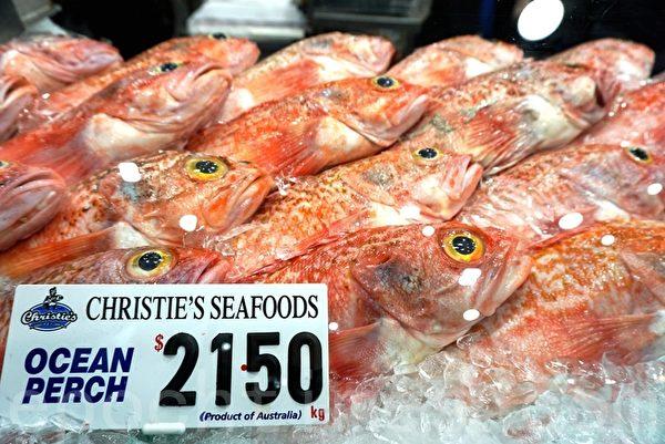 """2015年12月23日,悉尼鱼市场(Sydney Fish Market)清晨5点迎来了第20届""""36小时海鲜马拉松""""。市场内的零售商家会连续不停的一直营业到24日平安夜下午5点。悉尼鱼市场预期在36小时内吸引10万名顾客。图为市场内商家准备了新鲜充足的海鲜产品。(李裕/大纪元)"""