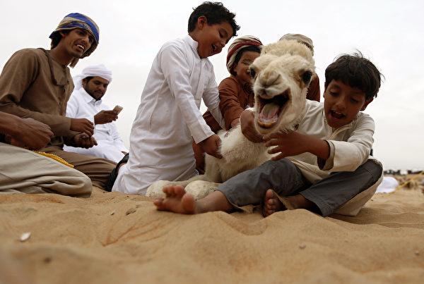 2015年12月26日,阿布扎比郊外的Mazayin Dhafra骆驼节期间,阿联酋孩子带着骆驼宝宝在城市附近的沙漠玩,艺术节包括骆驼选美比赛,阿联酋手工艺品等民间文艺活动展示,吸引了来自波斯湾阿拉伯国家的游客。(KARIM SAHIB/AFP)