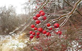 【文史】今日一陽生 冬至節氣到