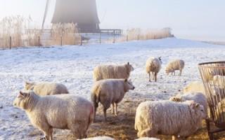 新年大禮 比利時送領土給荷蘭