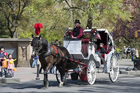 中央公園傳統的馬車。(攝影﹕戴兵/大紀元)