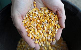 进口农产品冲击严重 中国农业面临挑战