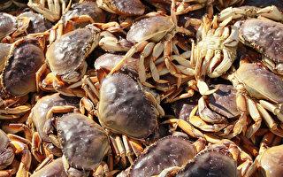 加州部分解禁珍寶蟹捕撈
