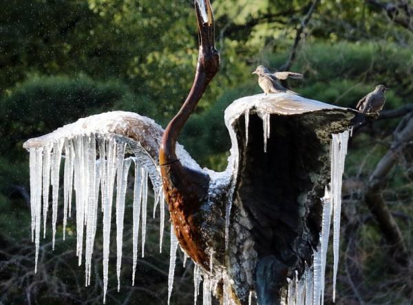 2016年1月25日,日本东京公园,因寒流影响,日本多地当天气温降到今年冬季的最低水平,图为一座鹤的雕塑喷泉结冰,冰柱挂在鹤的翅膀上。(Yoshikazu TSUNO/AFP)
