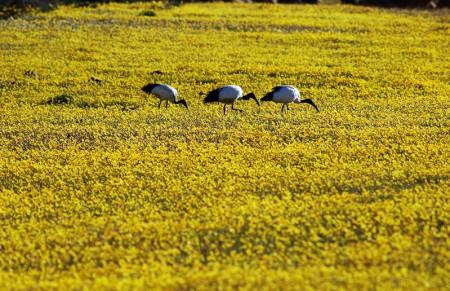 人們在非洲納馬誇蘭的美麗花海。(RODGER BOSCH/AFP/GettyImages)