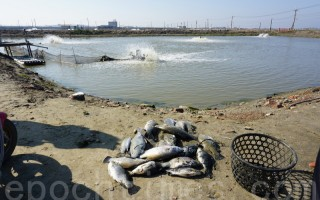 台寒流漁損近8億 高雄災情超越台南