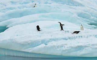 快乐的壮举:企鹅6个月迁徙1.5万公里