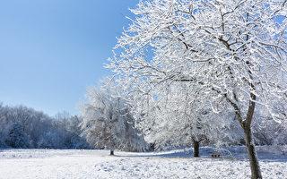 青松絮语:寒冷的故乡 美丽的回忆