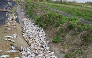豪雨袭台 农损达6.5亿 渔产占一半