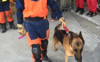 无敌搜救犬双认证 台南地震出任务