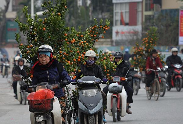 2016年2月5日,通往河内市中心道路上,民众正在运送越南过年必买的金橘树,今年2月8日是猴年的大年初一。(HOANG DINH Nam / AFP)