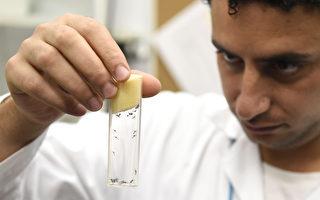 科学家:畸形胚胎大脑发现兹卡病毒