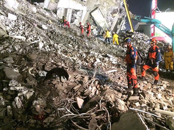 新北市府消防局12日持續在臺南支援搜救,派出多隻資深搜救犬出動救災。搜救犬(圖)盡責地在廢墟中,嗅出任何氣息,協助救難人員定位。(新北市政府消防局提供)