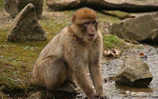 这人拿食物随意逗猴子  结果猴子竟…真是翻脸不认人啊!