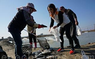 寒害損失慘  台漁業署撥3.6億助漁民