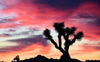組圖:這裡是加州最美的地方 沒有海岸線