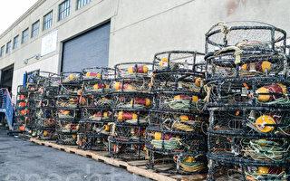 加州漁民願再推遲大蟹季 至水域全部清潔
