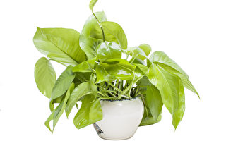 太驚人!科學實驗證實植物五大情感功能