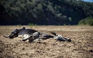 南非旱災惡化 災民請政府認真面對