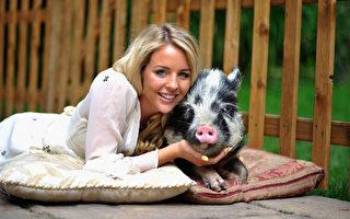 組圖:可愛小豬萌樣大集合