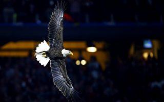 3萬美元懸賞 追查白頭鷹死因