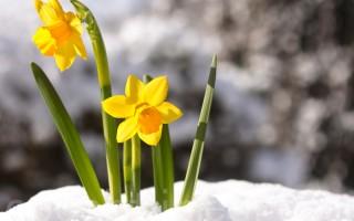本週日(3月27日)是復活節,基督徒認為,復活節象徵重生與希望。印第安納州勞瑞爾市一戶人家,在復活節之前找到失踪逾40年的家人,別具重生意義。(Fotolia)