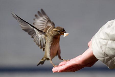 Manger comme un moineau.有個鳥胃/吃飯如麻雀–食量小。圖為一位遊客餵食給一隻小麻雀。(KAY NIETFELD/AFP)
