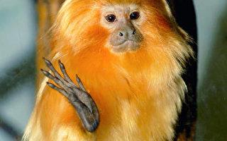 布鲁崙动物园举办中国新年庆祝活动