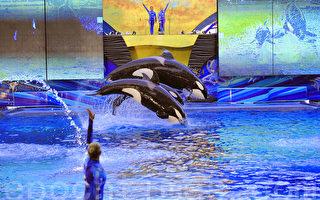 奥兰多海洋世界杀人鲸病情恶化