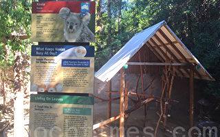 洛動物園無尾熊失蹤 或被山獅掠食