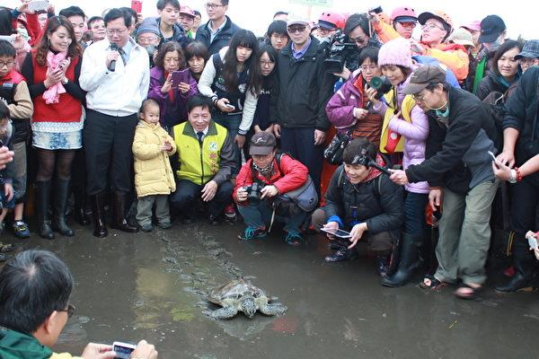 浑身伤发臭绿蠵龟 安安重返大海