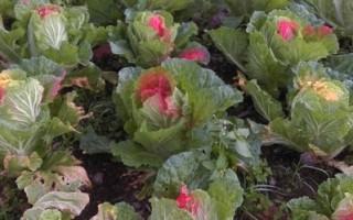 臺警破獲黑幫假好心放貸 菜園噴漆強奪農地