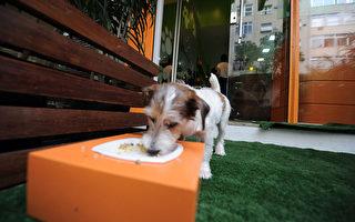 下月起 狗狗可以進餐廳戶外餐區
