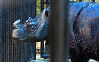 極度瀕危犀牛被發現 40年來首次